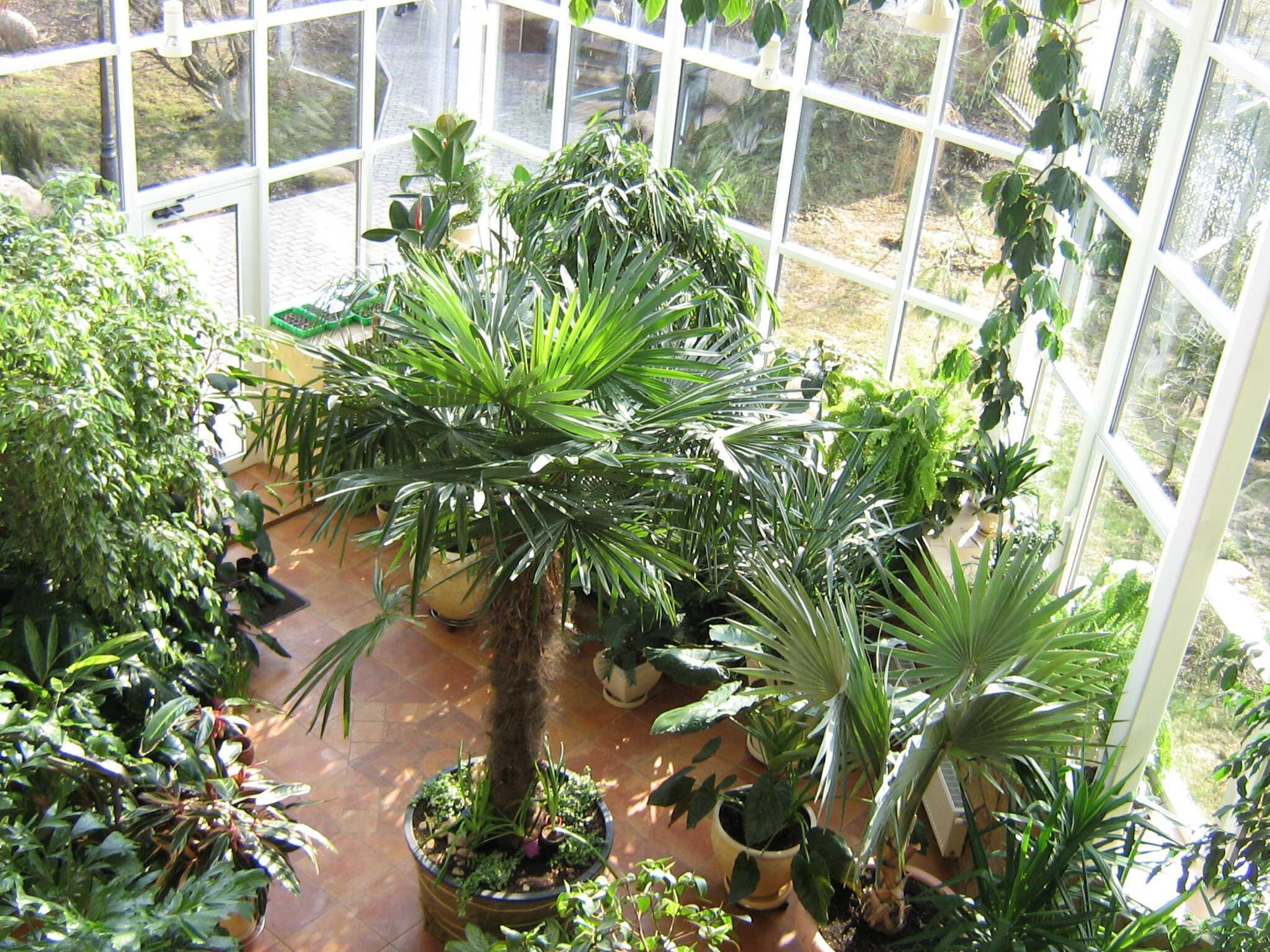 Növények teleltetése a Ciszterci Házban